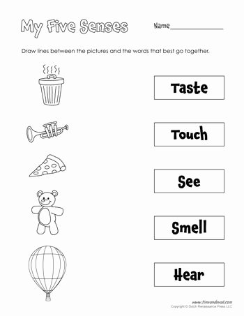 5 Senses Worksheets for Preschoolers Awesome A Printable Five Senses Matching Worksheet for Preschool