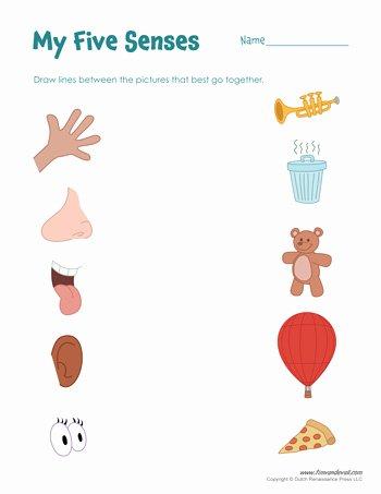 5 Senses Worksheets for Preschoolers Awesome Free Five Senses Worksheets for Kids
