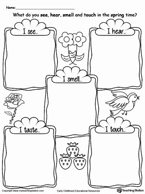 5 Senses Worksheets for Preschoolers Beautiful the Five Senses In the Spring Time