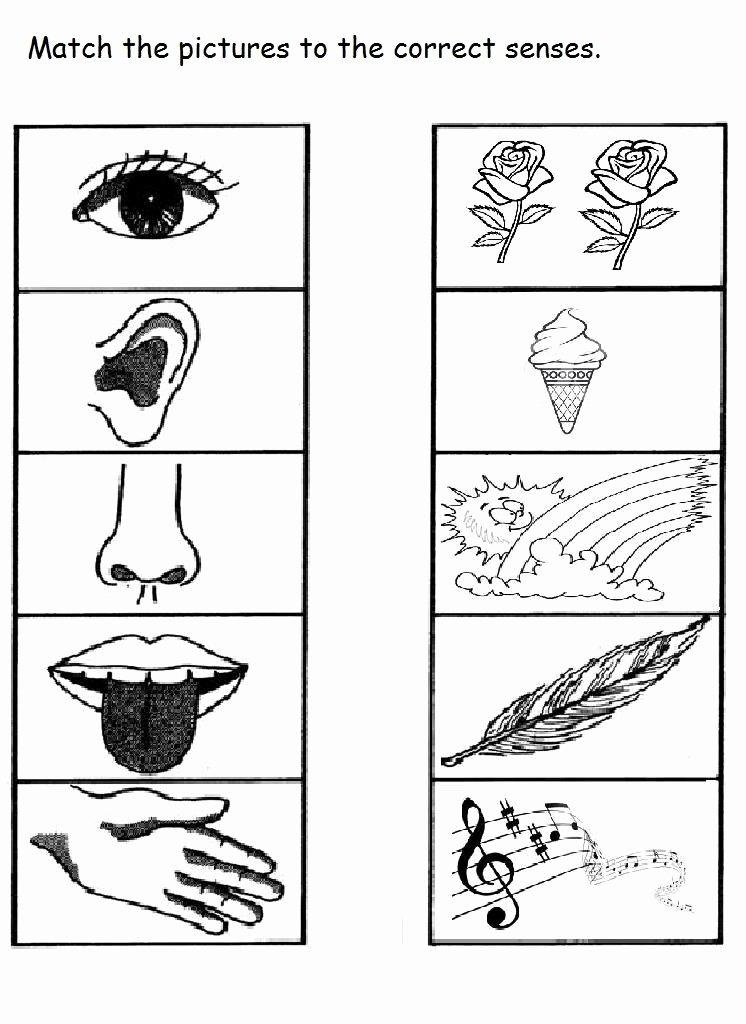5 Senses Worksheets for Preschoolers Best Of 5 Senses Worksheet for Kids 10