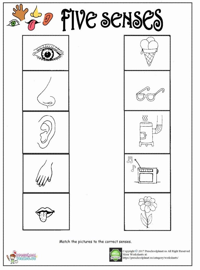 5 Senses Worksheets for Preschoolers top Printable Five Senses Worksheet – Preschoolplanet