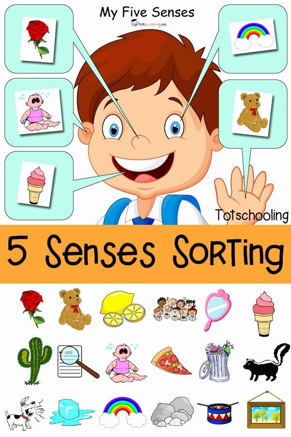 5 Senses Worksheets for Preschoolers Unique Five Senses sorting Printable
