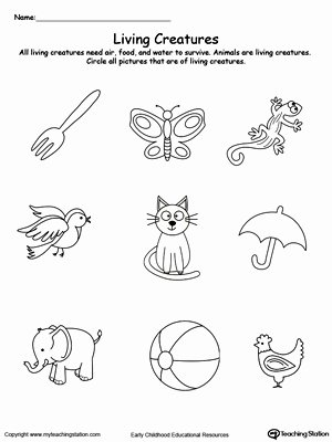Animal Worksheets for Preschoolers Awesome Kindergarten Plants and Animals Printable Worksheets