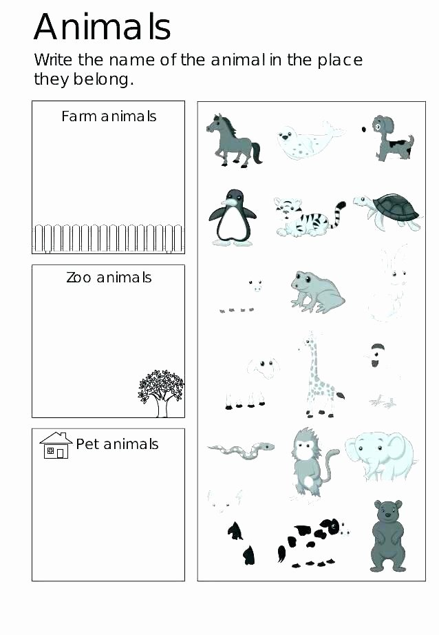 Animal Worksheets for Preschoolers Lovely Zoo Worksheets Kindergarten – Keepyourheadup