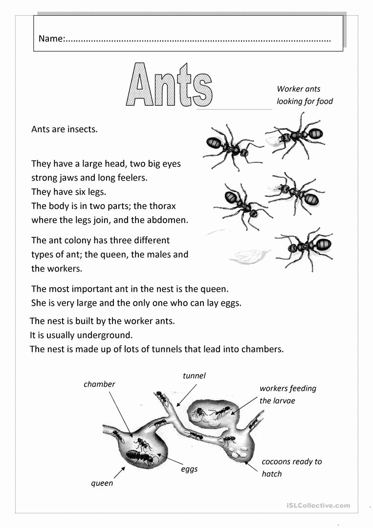 Ant Worksheets for Preschoolers Fresh Ants English Esl Worksheets for Distance Learning and