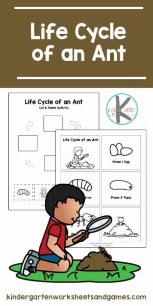 Ant Worksheets for Preschoolers Unique Free Life Cycle Of An Ant Printable