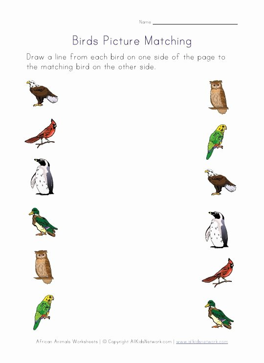 Bird Worksheets for Preschoolers Awesome Birds themed Worksheets for Kids
