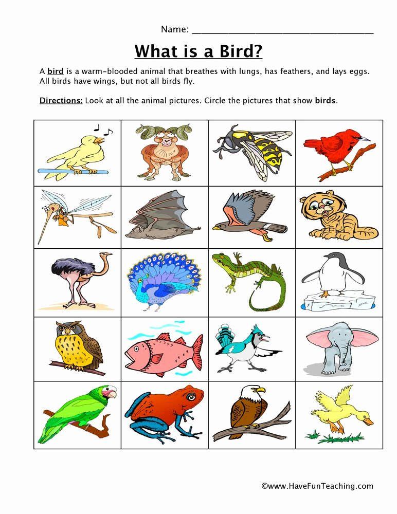 Bird Worksheets for Preschoolers Beautiful Bird Classification Worksheet