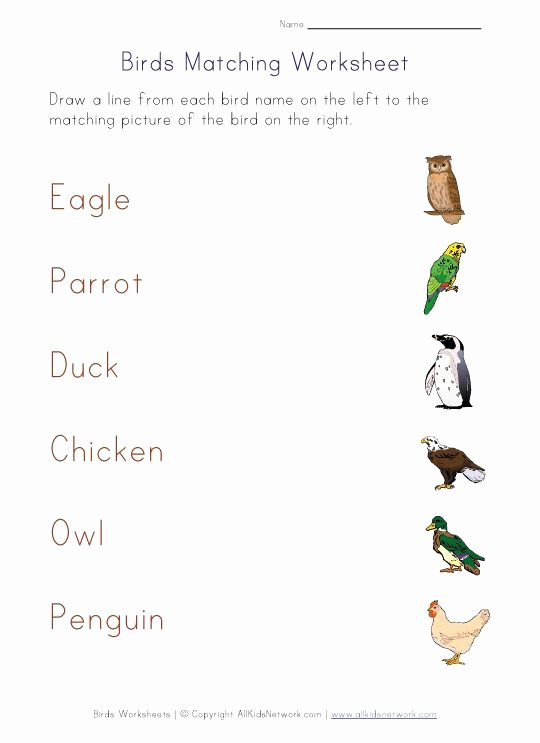 Bird Worksheets for Preschoolers Best Of Matching Worksheet Birds