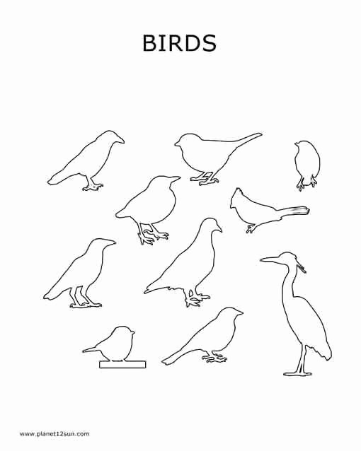 Bird Worksheets for Preschoolers Inspirational Birds Coloring Page Preschool Planet12sun Printables
