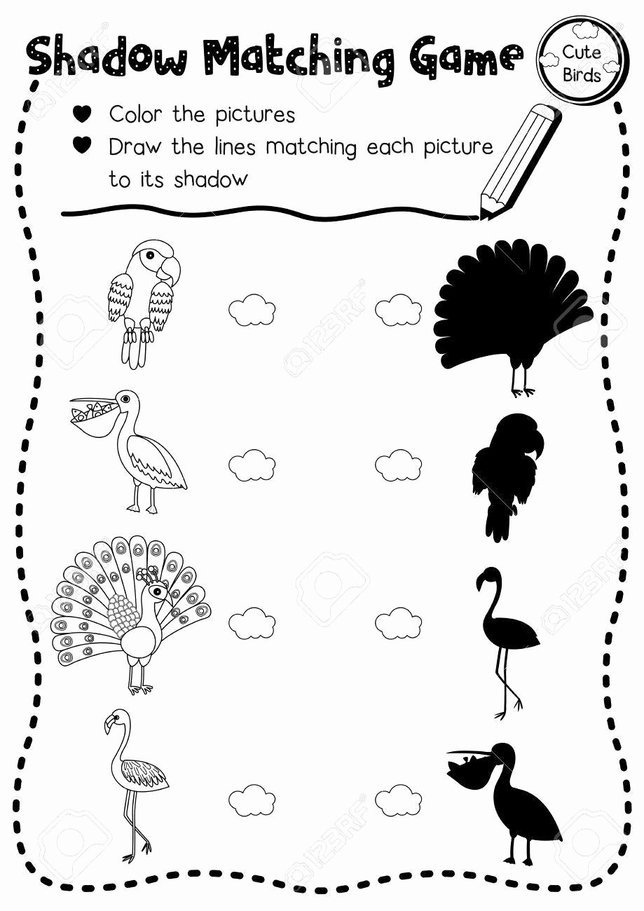Bird Worksheets for Preschoolers Inspirational Shadow Matching Game Of Cute Bird Animals for Preschool Kids