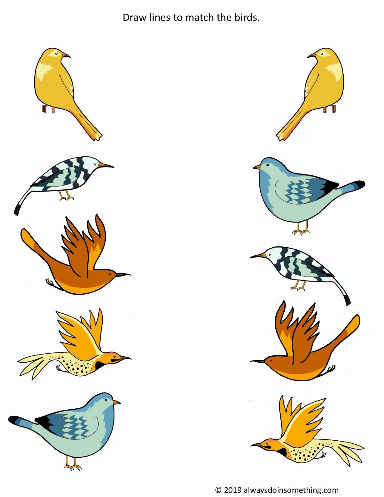 Bird Worksheets for Preschoolers Lovely Birds Worksheets Preschool
