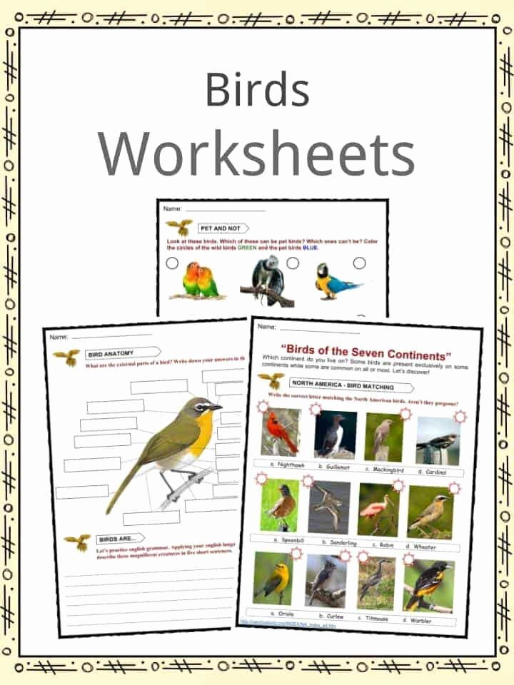 Bird Worksheets for Preschoolers top Bird Facts Worksheets Habitat Diet & Information for Kids