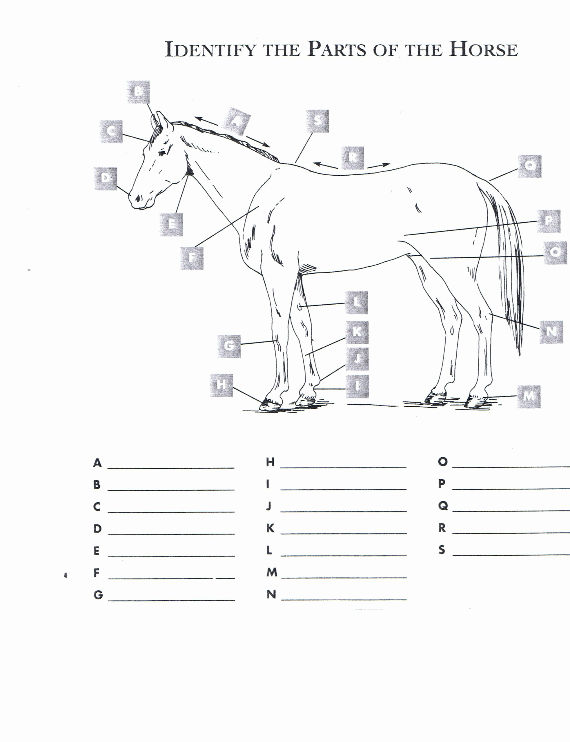 Body Parts Printable Worksheets for Preschoolers Unique Fill In the Blank English Worksheet Printable Worksheets and