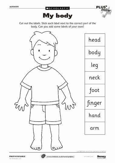 Body Parts Worksheets for Preschoolers Best Of Pin On Vallada