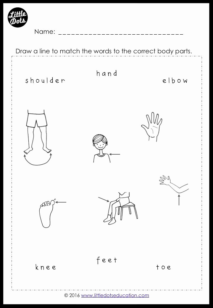 Body Parts Worksheets for Preschoolers Lovely Free Body Parts Worksheets for Preschool