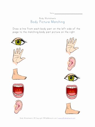 Body Worksheets for Preschoolers Fresh Body Part Picture Matching Worksheet