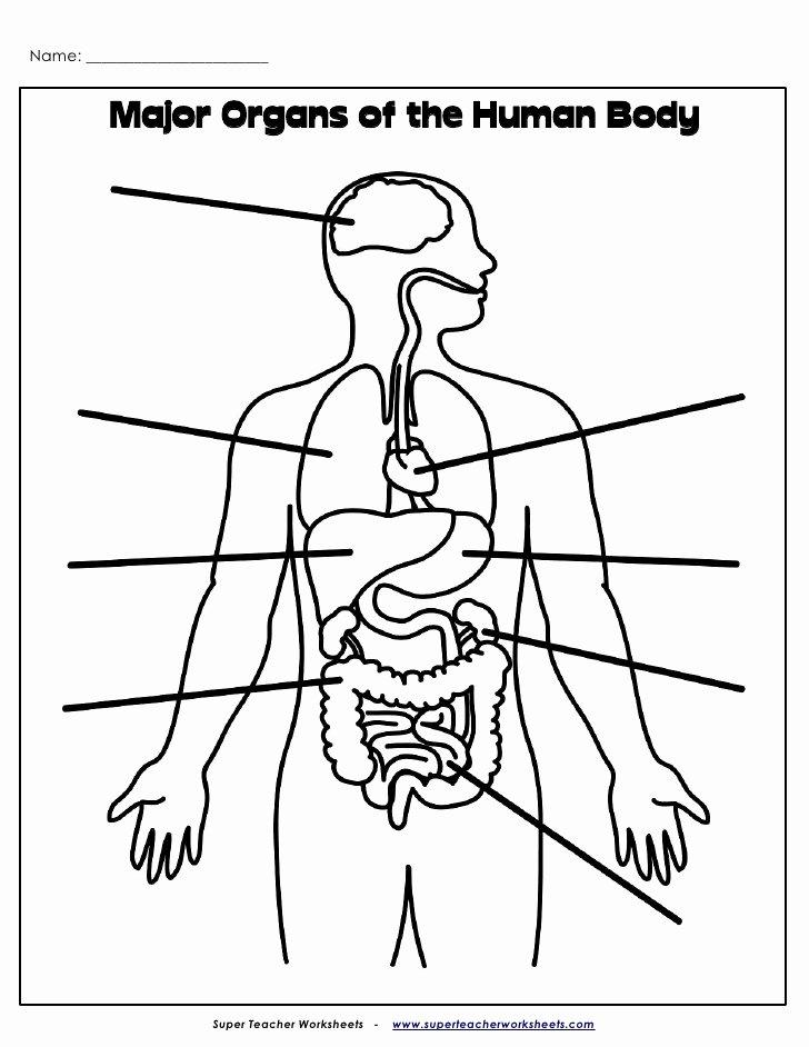 Body Worksheets for Preschoolers Fresh organs Label Internal Body Worksheets 2nd Grade Math Fluency