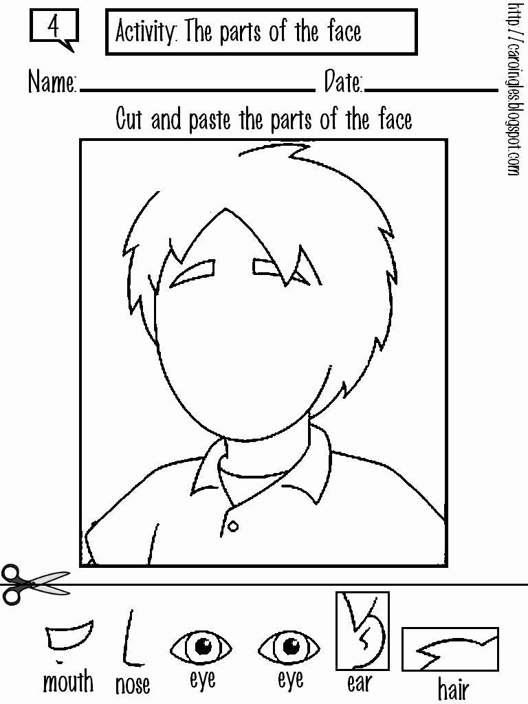 Body Worksheets for Preschoolers New 4 Preschool Worksheets Free Printables Cut and Paste
