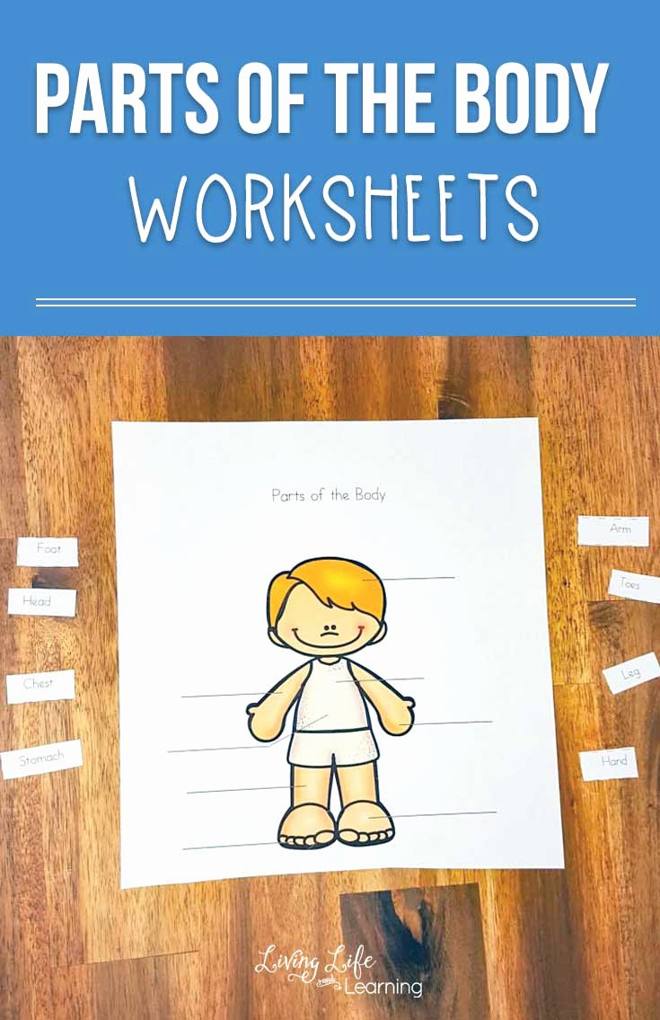 Body Worksheets for Preschoolers New Parts Of the Body Worksheets for Kids is A Fun Way to Teach