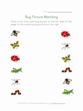 Bug Math Worksheets for Preschoolers top Bugs Worksheet for Kids Picture Matching