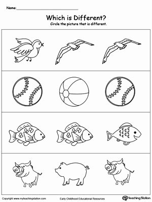 Concept Worksheets for Preschoolers Beautiful Identify which Picture is Different