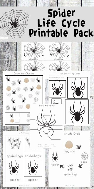 Counting Bugs Worksheets for Preschoolers Lovely Free Spider Life Cycle Worksheets