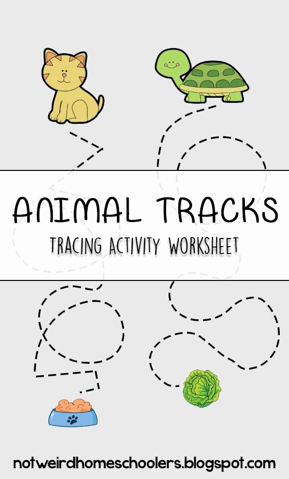 Eye Hand Coordination Activities Worksheets for Preschoolers Fresh Animal Tracks Tracing Activity Worksheet
