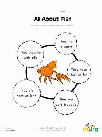 Fish Worksheets for Preschoolers Beautiful All About Fish Worksheet