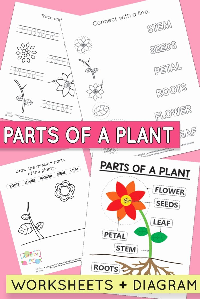 Flowers Worksheets for Preschoolers Inspirational Free Printable Parts Of A Plant Worksheets Itsybitsyfun