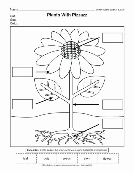 Flowers Worksheets for Preschoolers Lovely the Mailbox