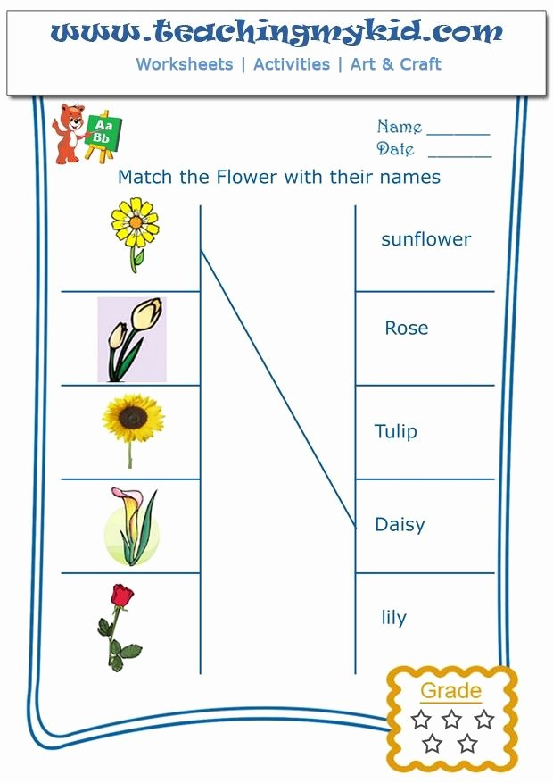 Flowers Worksheets for Preschoolers New Printable Kindergarten Worksheets Match Flowers with Name