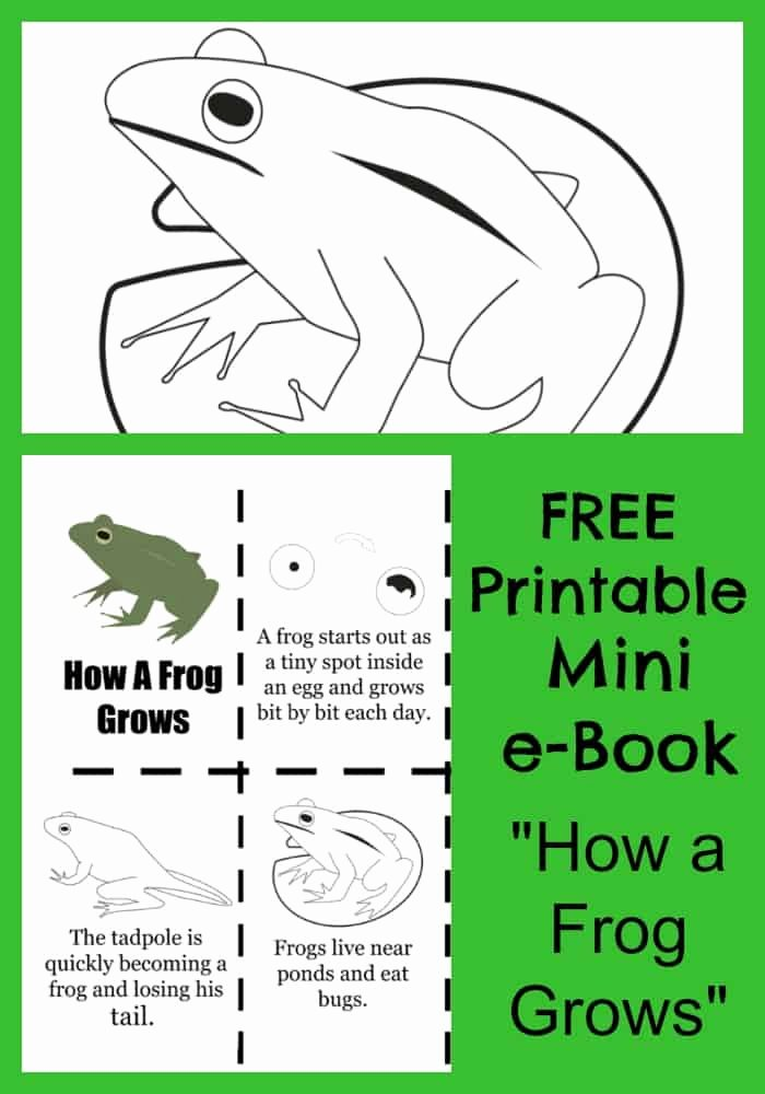 "Frog Worksheets for Preschoolers Lovely Free ""how A Frog Grows"" Printable E Book & Coloring Pages"