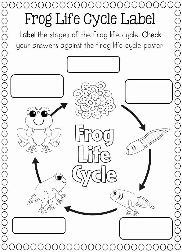 Frog Worksheets for Preschoolers New Life Cycle Frog Coloring Crafts and Worksheets for