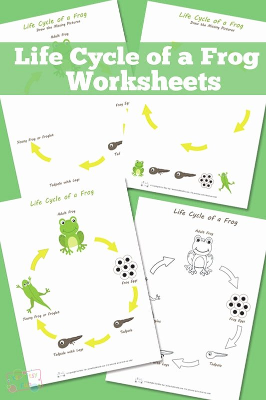 Frog Worksheets for Preschoolers Unique Life Cycle Of A Frog Worksheet Itsybitsyfun