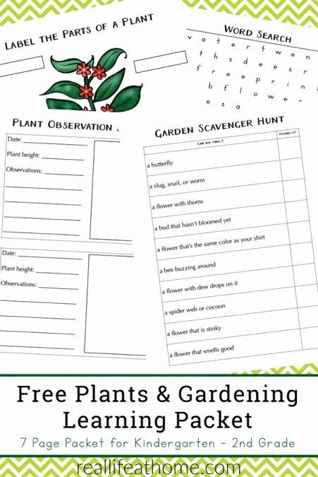 Gardening Worksheets for Preschoolers New Free Plant Worksheets for Kindergarten 3rd Grade Perfect