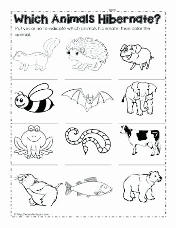 Hibernation Worksheets for Preschoolers Awesome which Animals Hibernate