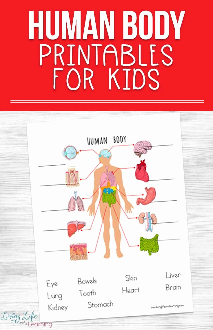 Human Body Worksheets for Preschoolers Beautiful Human Body Printables for Kids