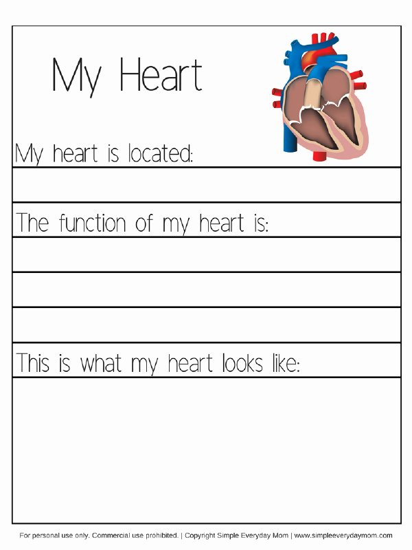Human Body Worksheets for Preschoolers Beautiful Human Body Worksheets for Kindergarten & Up