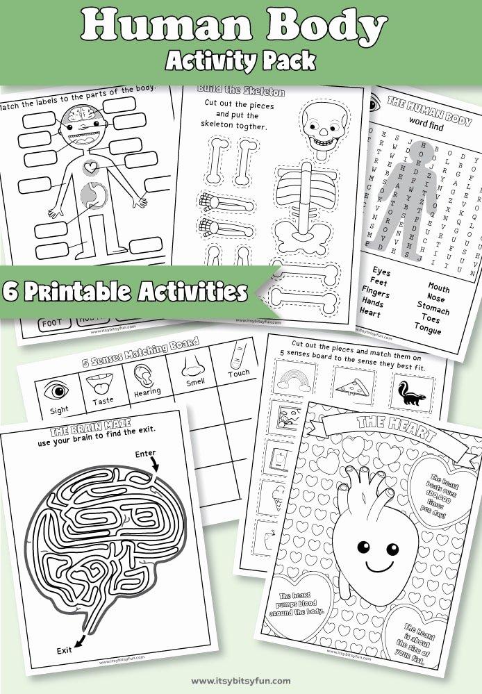 Human Body Worksheets for Preschoolers Beautiful Human Body Worksheets Itsybitsyfun