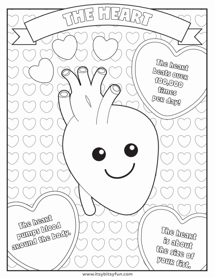 Human Body Worksheets for Preschoolers Lovely Pin by Candi Caspers Humanbody Human Body Worksheets