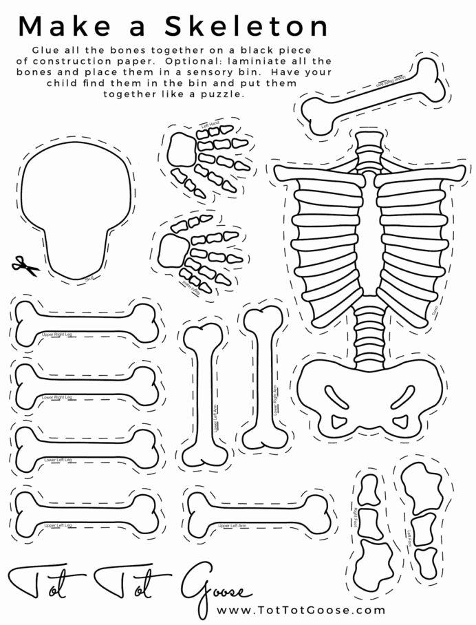 Human Body Worksheets for Preschoolers New Skeletons Cuerpo Humano Para Niños Actividades Del Body