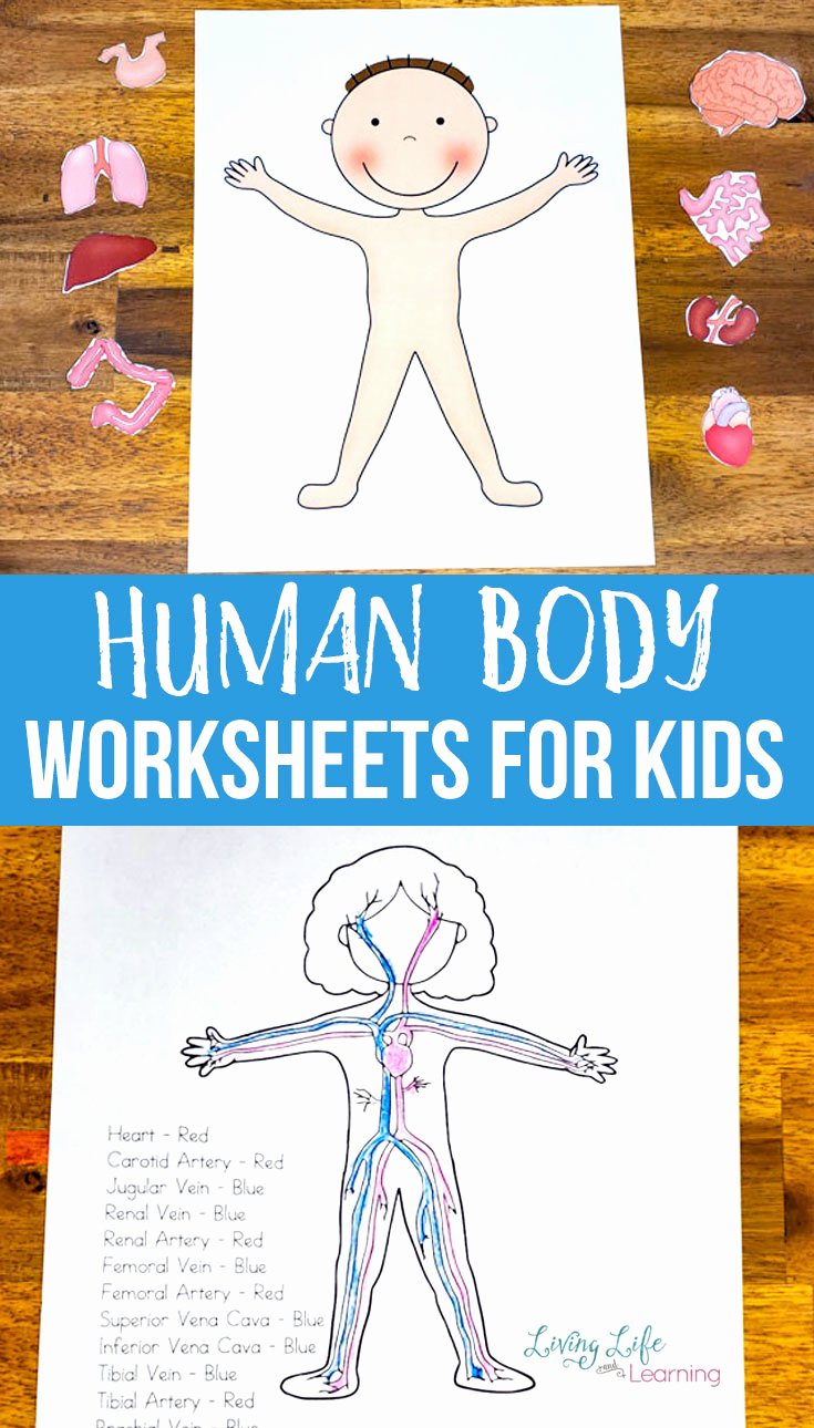 Human Body Worksheets for Preschoolers top Human Body Worksheets for Kids