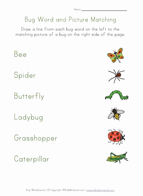 Insects Worksheets for Preschoolers Awesome Bug Worksheets for Kids