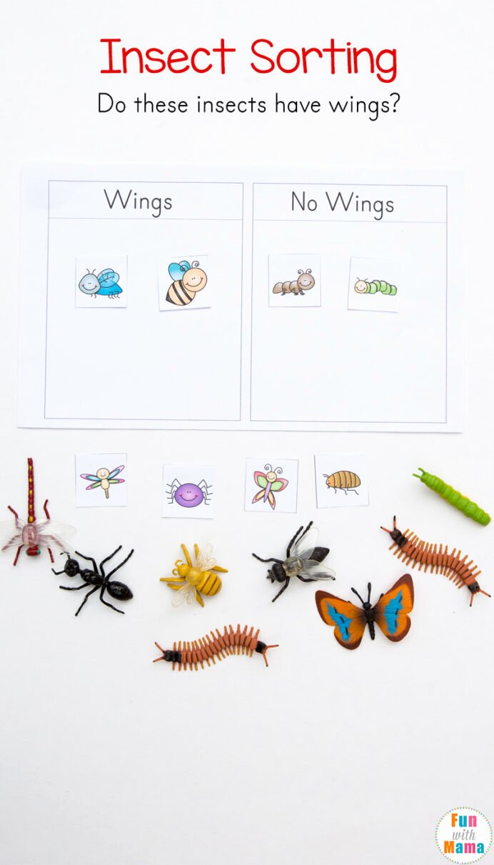 Insects Worksheets for Preschoolers Awesome Free Parts the Insect Worksheets Teacher Made Insects