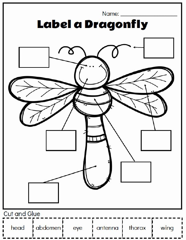 Insects Worksheets for Preschoolers Awesome Printable Preschool Bug Activities for Learning & Fun