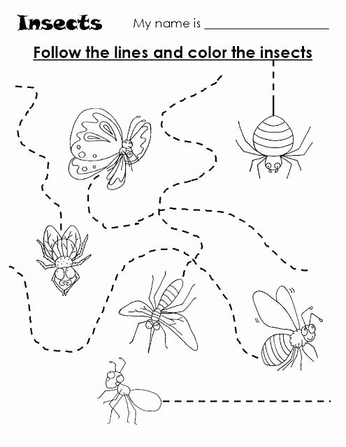 Insects Worksheets for Preschoolers Fresh Animal Trace Worksheets for Kids
