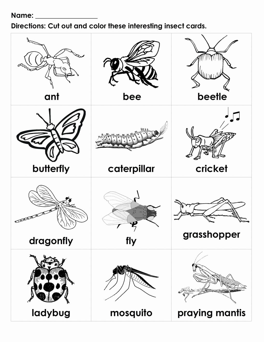 Insects Worksheets for Preschoolers Lovely Insects Worksheets for Kindergarten Bugs for Kids to Color