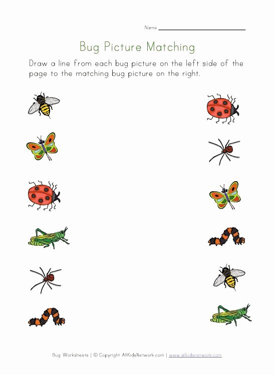 Insects Worksheets for Preschoolers top Bugs Worksheet for Kids Picture Matching