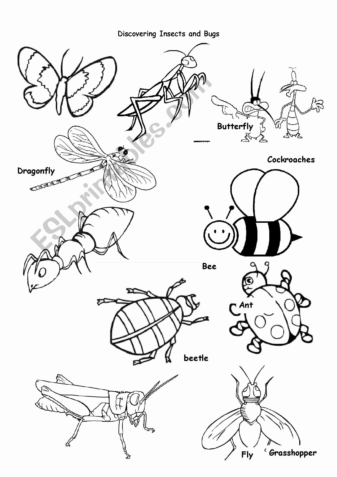 Insects Worksheets for Preschoolers top Insects Animals Worksheet Printable Worksheets and